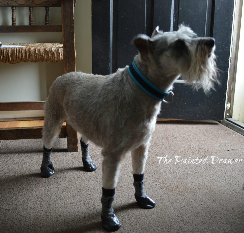 Dog Boots www.thepainteddrawer.com