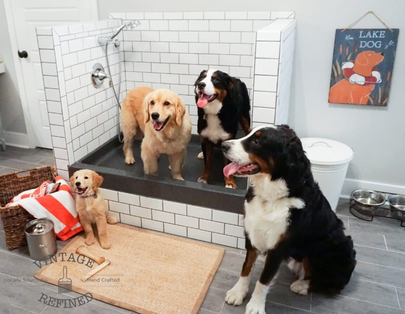 Vintage Refined Dog Shower