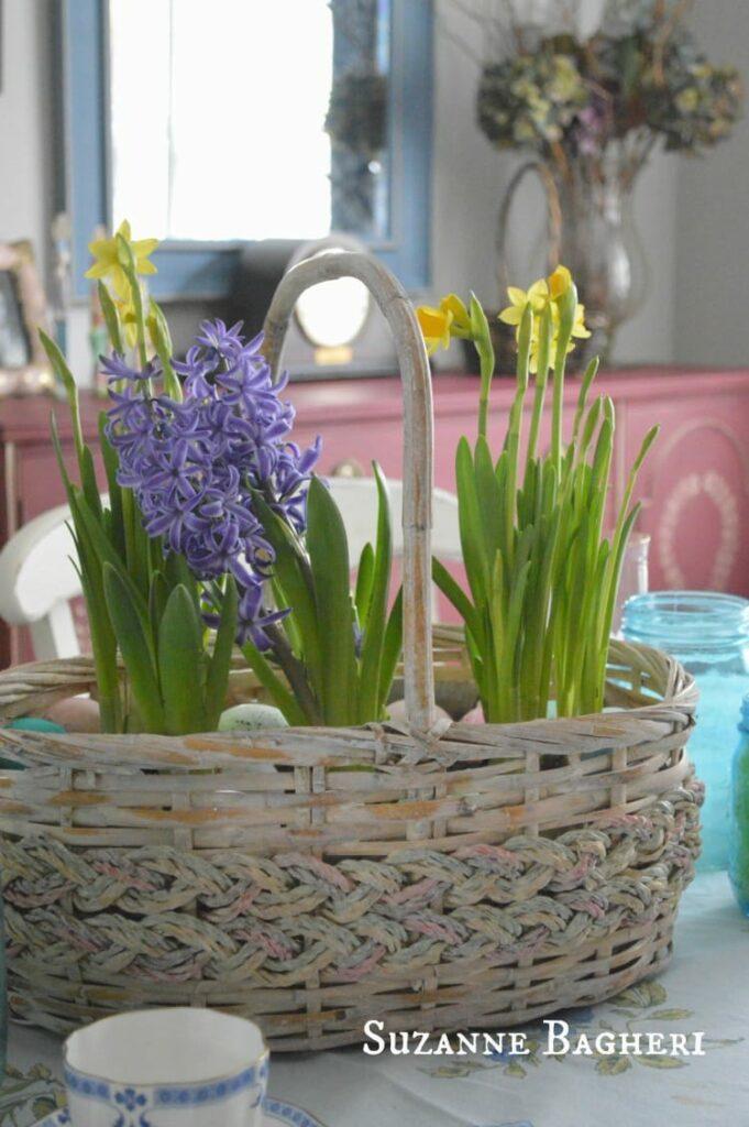 Spring Bulb Baskets