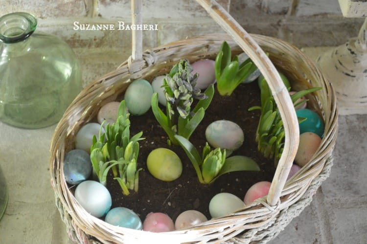 Indoor Bulb Garden in a Easter Basket for Spring