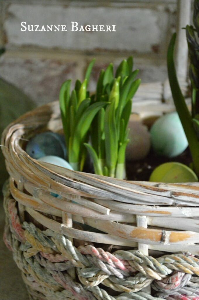 Vintage Basket Bulb Garden for Easter by Suzanne Bagheri