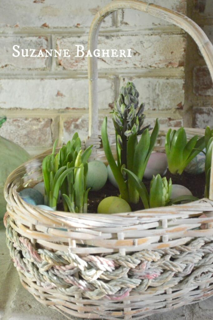 Vintage Easter Basket Bulb Garden for Spring