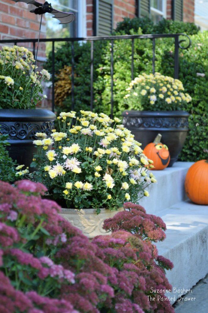 Fall Garden Colors, My Home