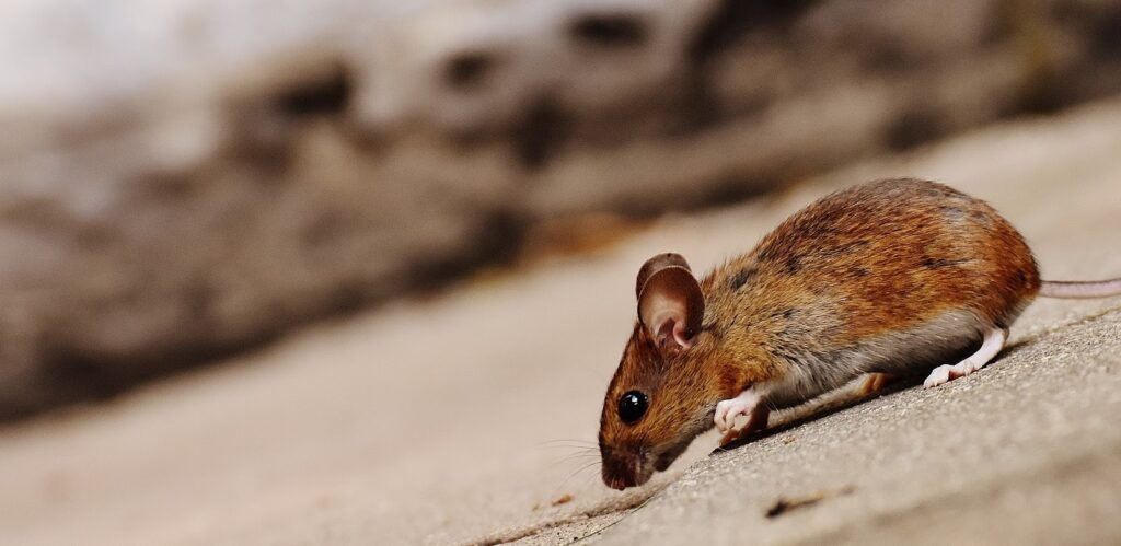 What Should You Expect From Your Pest Control Service
