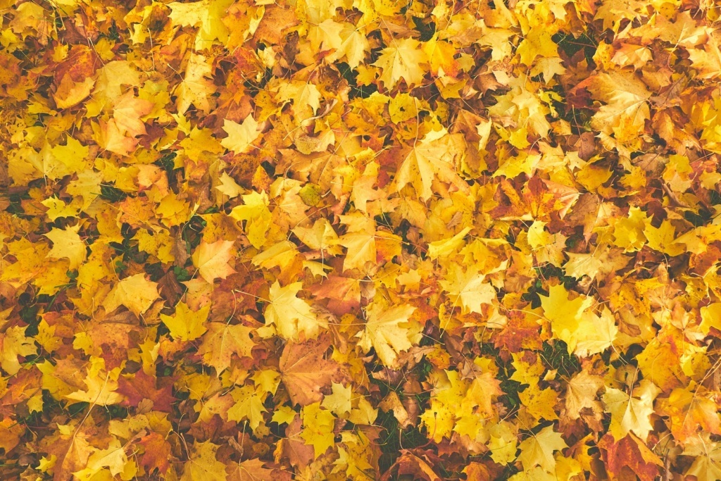 Getting Your Home Prepared For The Colder Weather Ahead